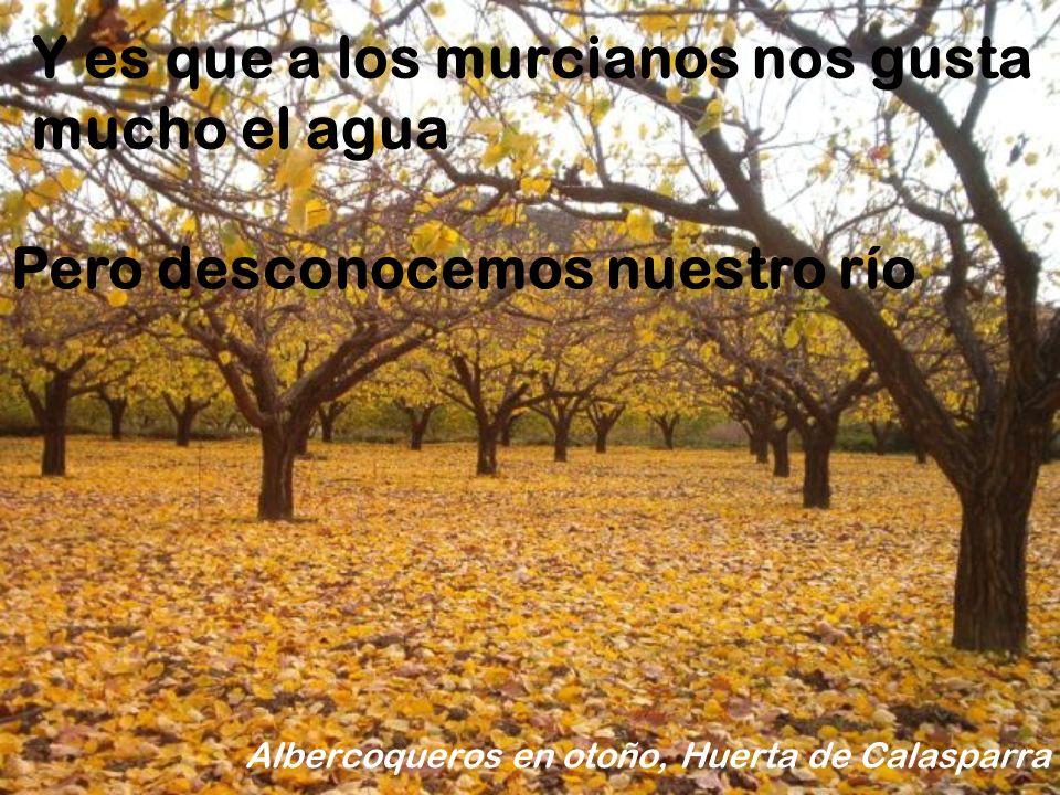 Todas estas fotos tienen una cosa en común Chorros del río Mundo, Albacete Pertenecen a la cuenca del río Segura