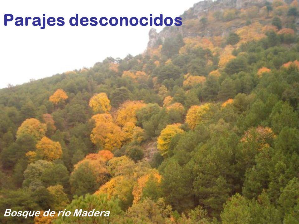 Todo un mundo de sorpresas nos espera Puente de la República, Cañón de la Fuensanta