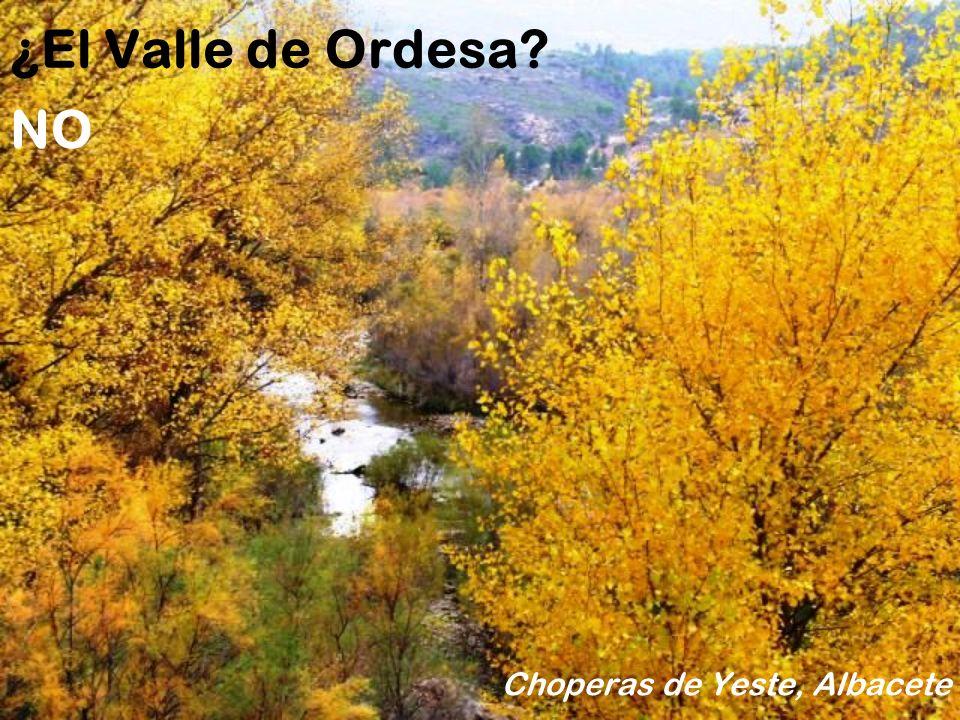 ¿El Valle del Jerte? Huerta de Cieza. Murcia NO