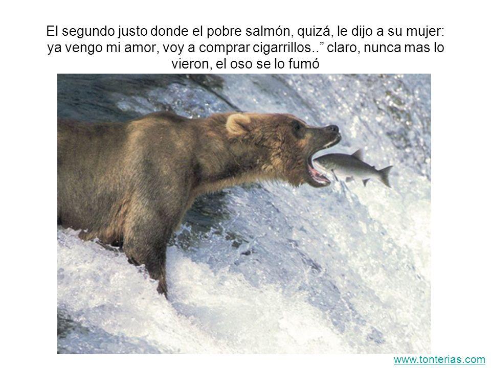 El segundo justo donde el pobre salmón, quizá, le dijo a su mujer: ya vengo mi amor, voy a comprar cigarrillos.. claro, nunca mas lo vieron, el oso se