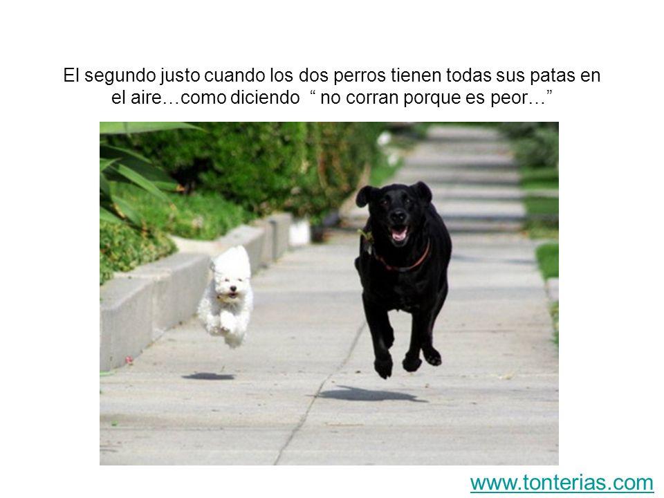 El segundo justo cuando los dos perros tienen todas sus patas en el aire…como diciendo no corran porque es peor… www.tonterias.com