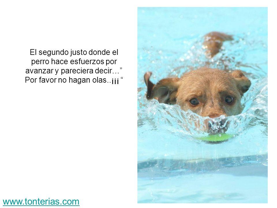 El segundo justo donde el perro hace esfuerzos por avanzar y pareciera decir… Por favor no hagan olas..¡¡¡ www.tonterias.com