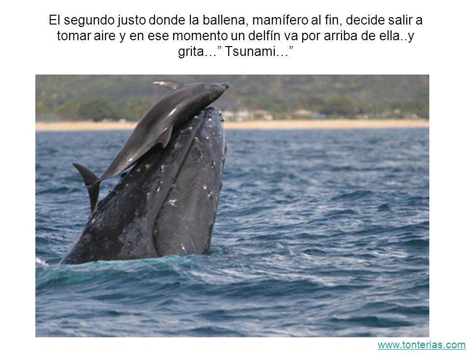 El segundo justo donde la ballena, mamífero al fin, decide salir a tomar aire y en ese momento un delfín va por arriba de ella..y grita… Tsunami… www.