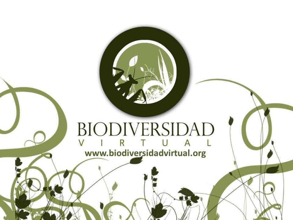 ¿Qué es Biodiversidad Virtual.Es una plataforma de participación ciudadana a través de internet.