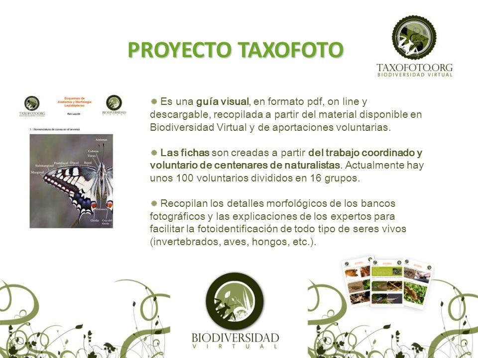 PROYECTO TAXOFOTO Es una guía visual, en formato pdf, on line y descargable, recopilada a partir del material disponible en Biodiversidad Virtual y de aportaciones voluntarias.
