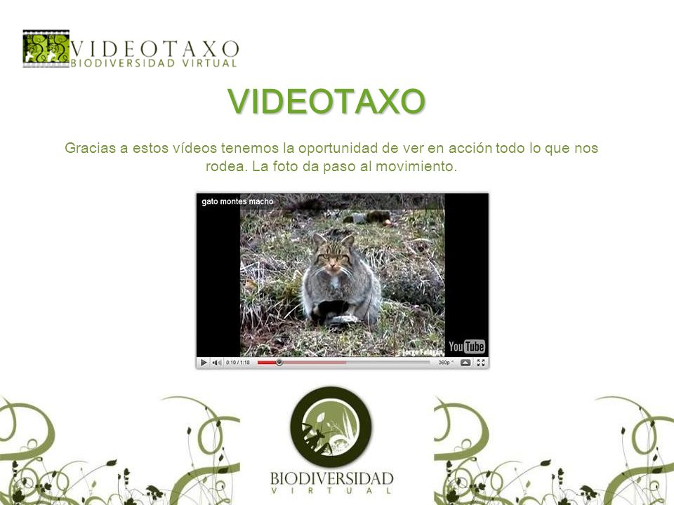 VIDEOTAXO Gracias a estos vídeos tenemos la oportunidad de ver en acción todo lo que nos rodea.