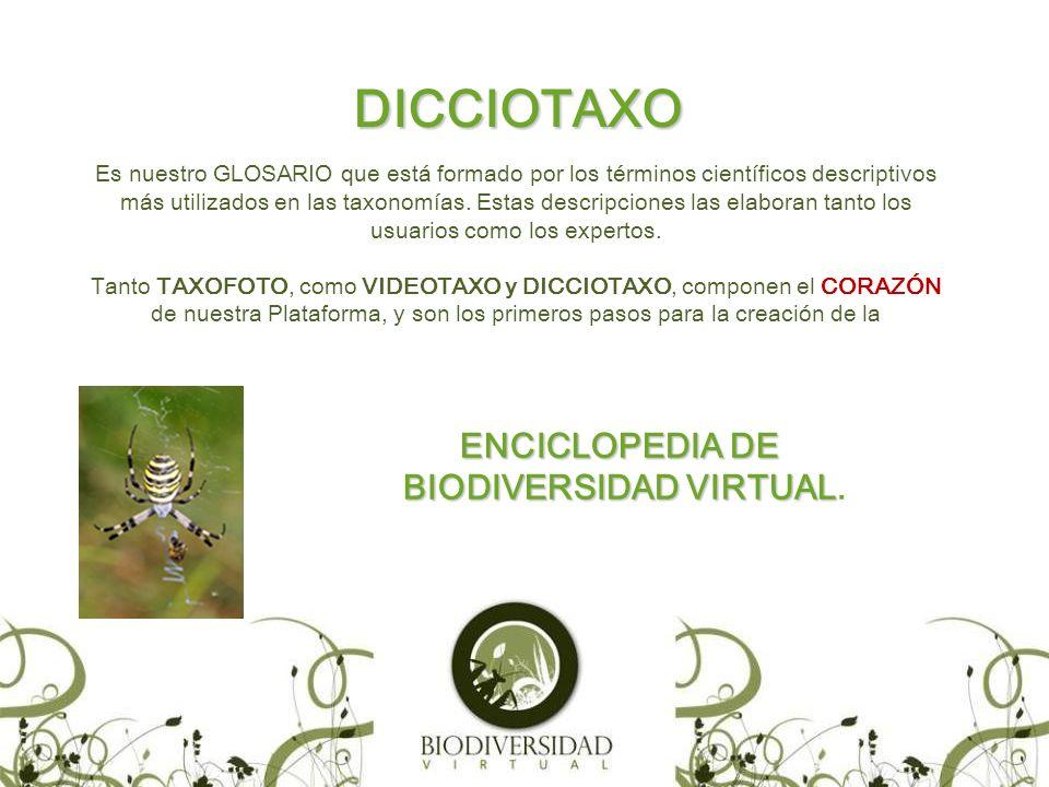 DICCIOTAXO Es nuestro GLOSARIO que está formado por los términos científicos descriptivos más utilizados en las taxonomías.