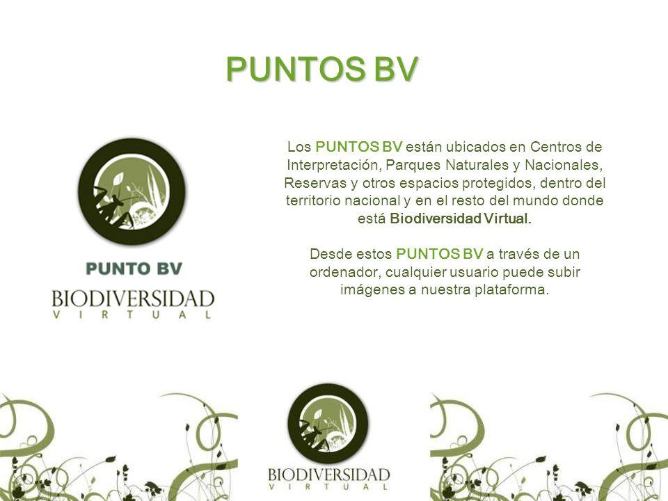 PUNTOS BV Los PUNTOS BV están ubicados en Centros de Interpretación, Parques Naturales y Nacionales, Reservas y otros espacios protegidos, dentro del territorio nacional y en el resto del mundo donde está Biodiversidad Virtual.