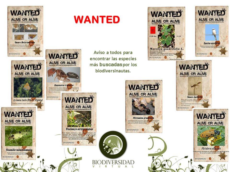 WANTED Aviso a todos para encontrar las especies más buscadas por los biodiversinautas.