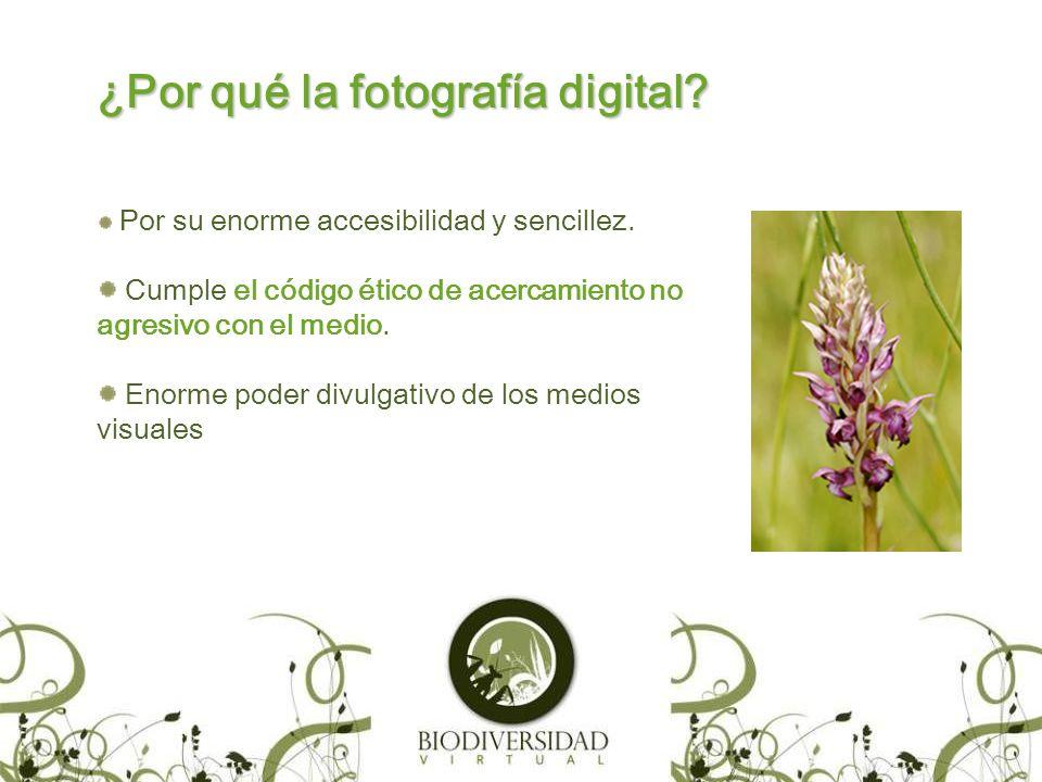 ¿Cómo Funciona www.biodiversidadvirtual.org.