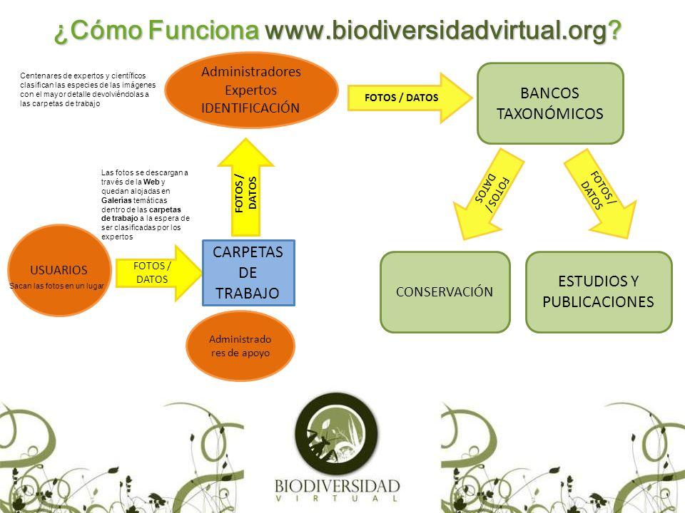 FOTOGRAFÍA y BIODIVERSIDAD (FyB) Nuestra asociación sin ánimo de lucro Fotografía y Biodiversidad gestiona la plataforma http://www.biodiversidadvirtual.org.http://www.biodiversidadvirtual.org Cuenta con un equipo de coordinadores y con los directores de las galerías así como coordinadores regionales.