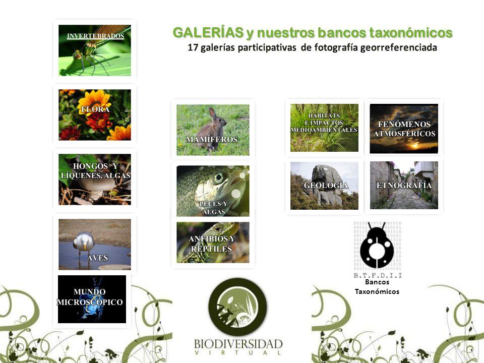 TESTINGS (Ver Calendario) Un testing de biodiversidad es un muestreo fotográfico de campo exhaustivo y ordenado en busca del mayor número posible de especies.