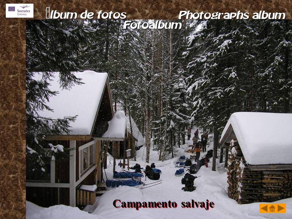 Campamento salvaje