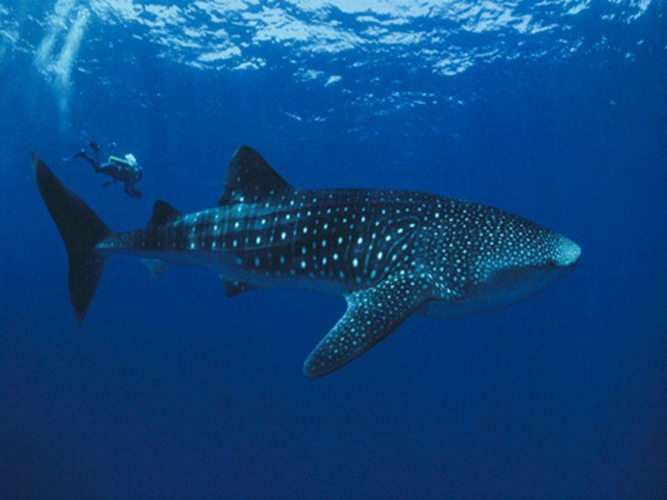 Doubilet recibió su primer premio en la Underwater Sara Prize, atribuído por la revista italiana Mundo Sumergido y menciones honoríficas de la American National Press Photographers Association, entre otros.