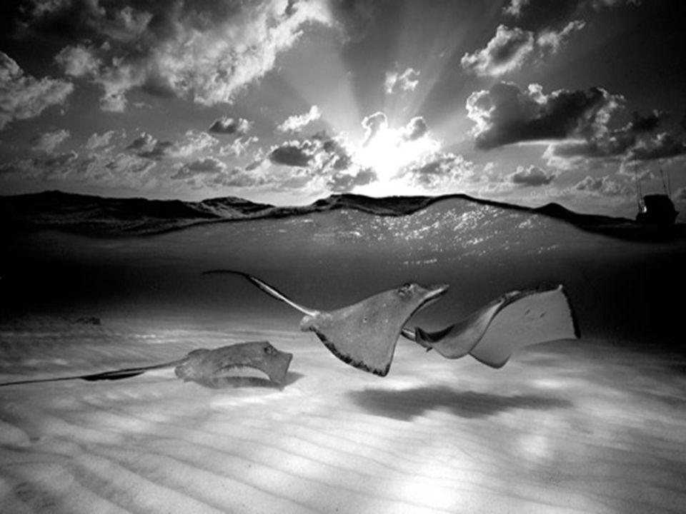 Más de 15 mil personas visitaron la Exposición de Fotografía Sub- acuática de David Doubilet en el Oceanario de Lisboa en el 2003.