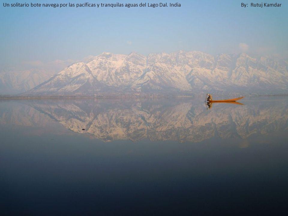 Un solitario bote navega por las pacíficas y tranquilas aguas del Lago Dal. India By: Rutuj Kamdar
