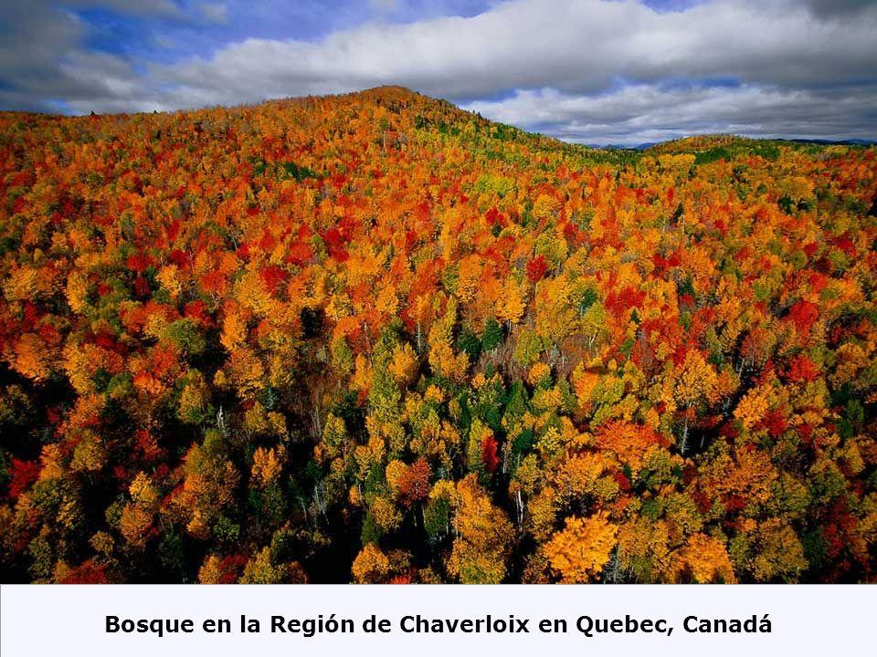 Bosque en la Región de Chaverloix en Quebec, Canadá