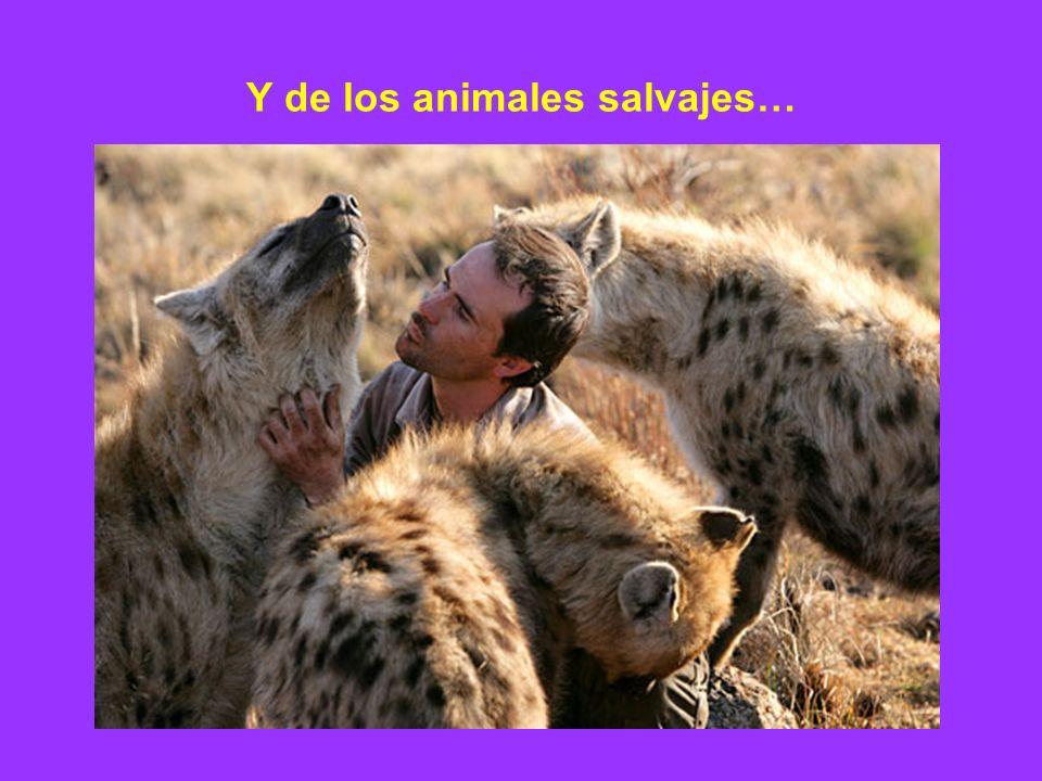 Y de los animales salvajes…