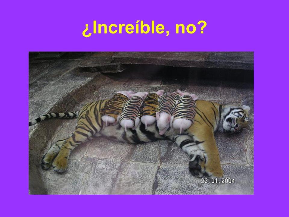 ¿Increíble, no