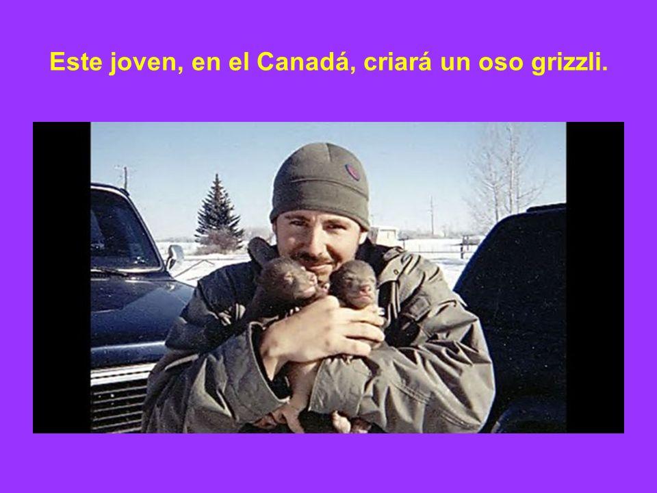 Este joven, en el Canadá, criará un oso grizzli.