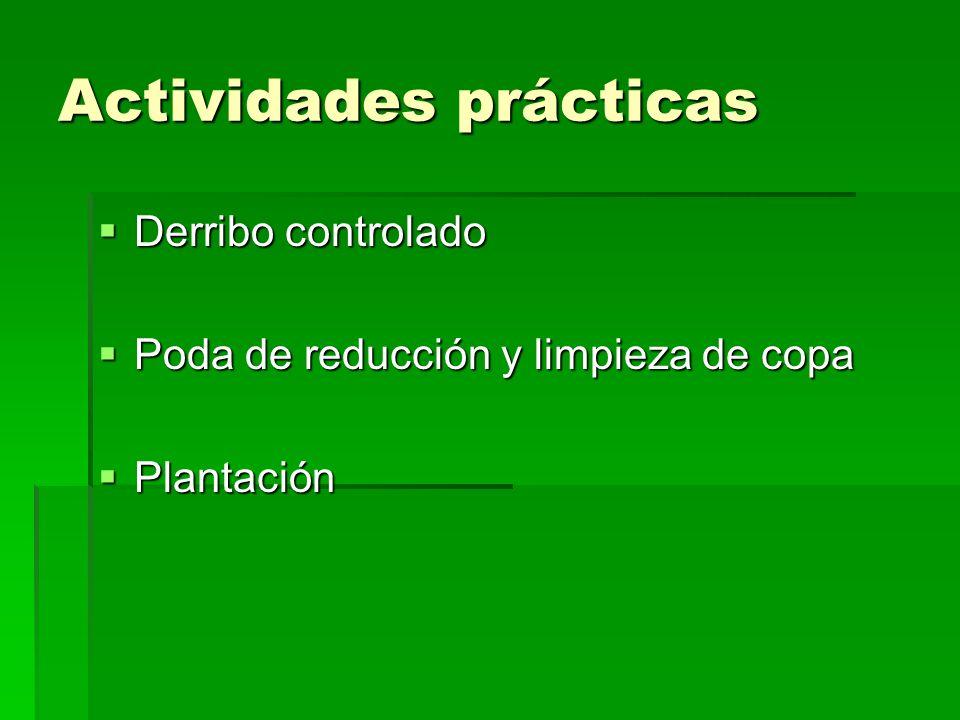 Actividades prácticas Derribo controlado Derribo controlado Poda de reducción y limpieza de copa Poda de reducción y limpieza de copa Plantación Plantación