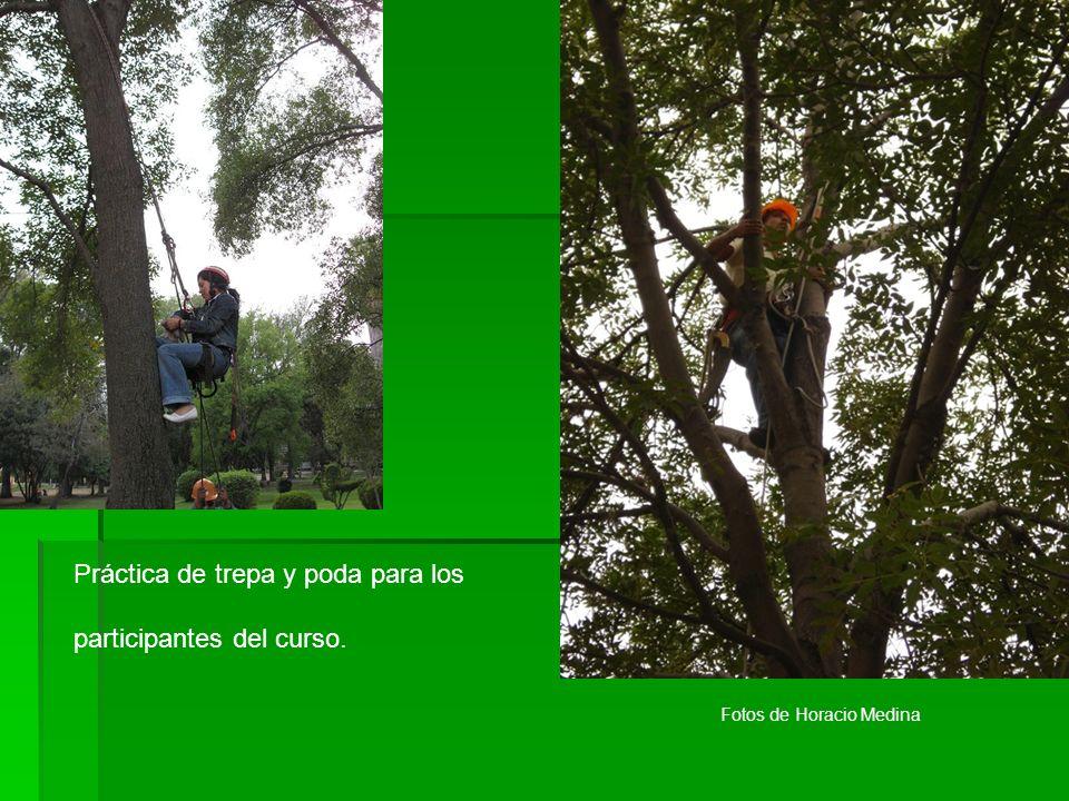 Práctica de trepa y poda para los participantes del curso. Fotos de Horacio Medina
