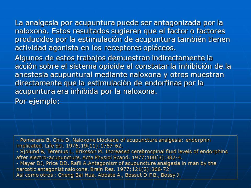 La analgesia por acupuntura puede ser antagonizada por la naloxona. Estos resultados sugieren que el factor o factores producidos por la estimulación