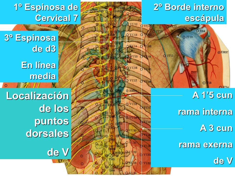1º Espinosa de Cervical 7 2º Borde interno escápula 3º Espinosa de d3 En línea media A 15 cun rama interna A 3 cun rama exerna de V de V Localización