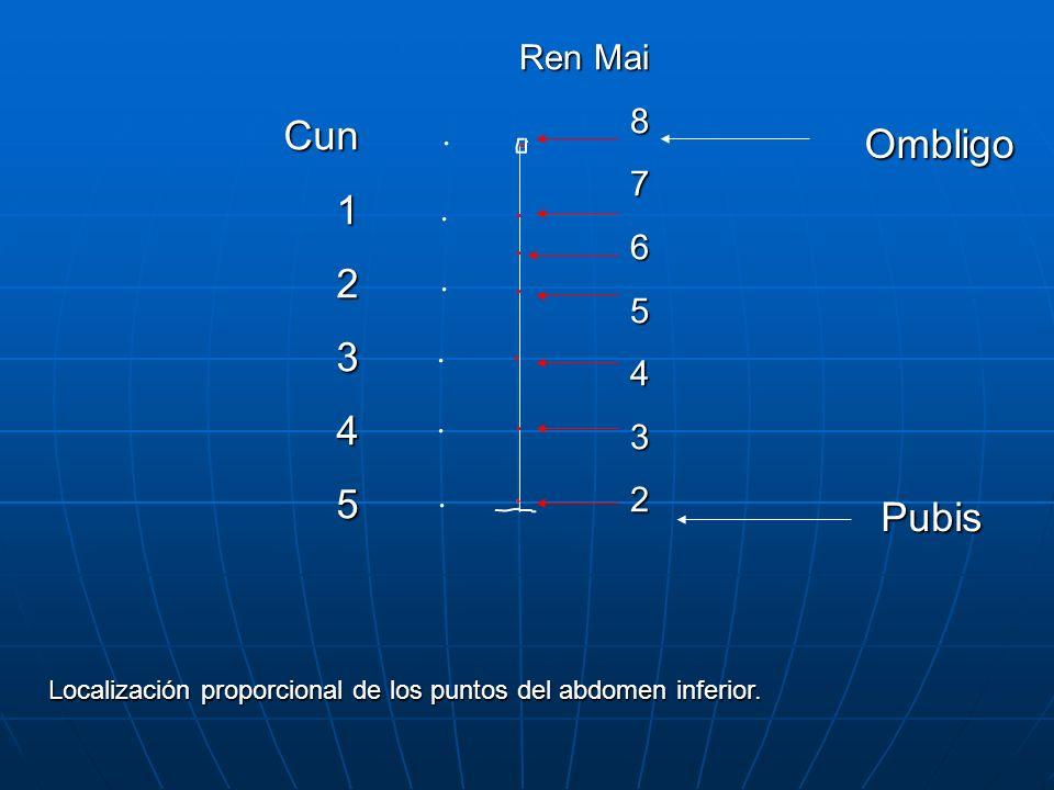 Ombligo Pubis Cun12345 Ren Mai 8765432 Localización proporcional de los puntos del abdomen inferior.