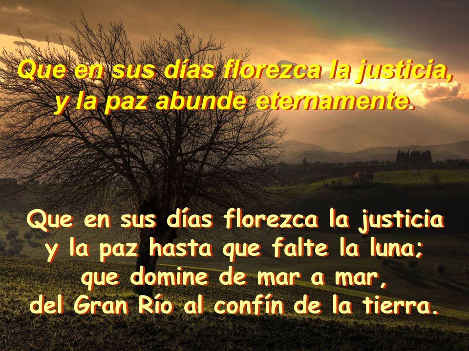 Que en sus días florezca la justicia, y la paz abunde eternamente. Que en sus días florezca la justicia, y la paz abunde eternamente. Dios mío, confía