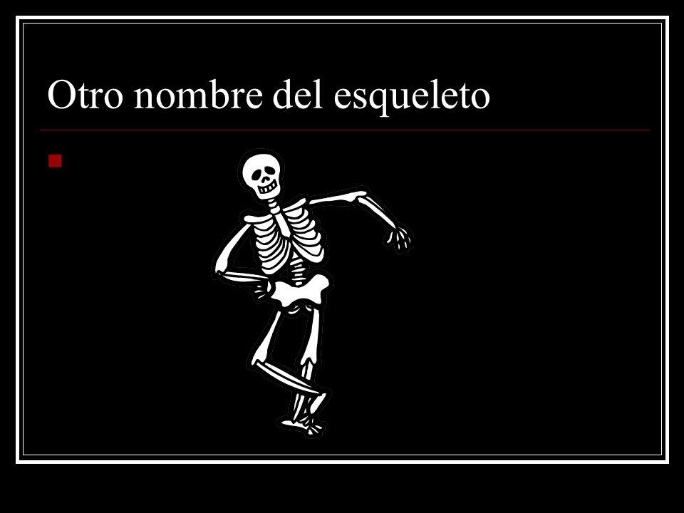 Otro nombre del esqueleto