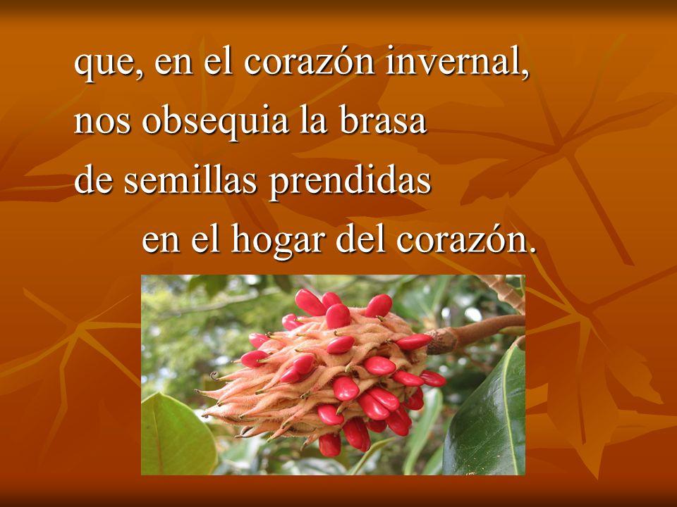 que, en el corazón invernal, nos obsequia la brasa de semillas prendidas en el hogar del corazón.