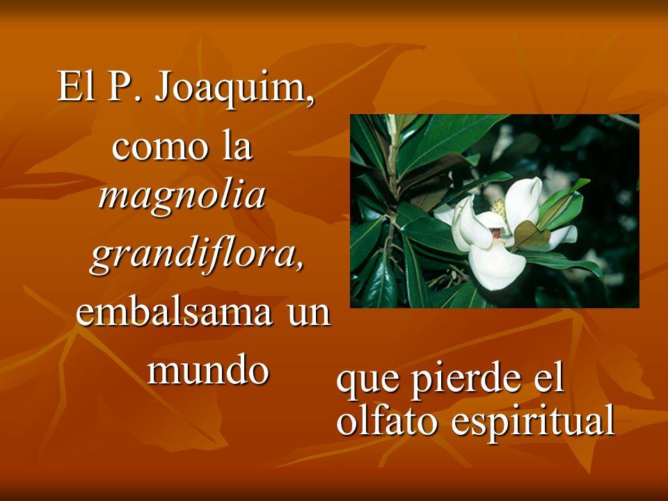 El P. Joaquim, El P.