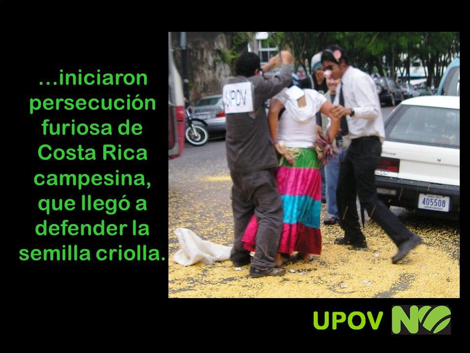 …iniciaron persecución furiosa de Costa Rica campesina, que llegó a defender la semilla criolla.