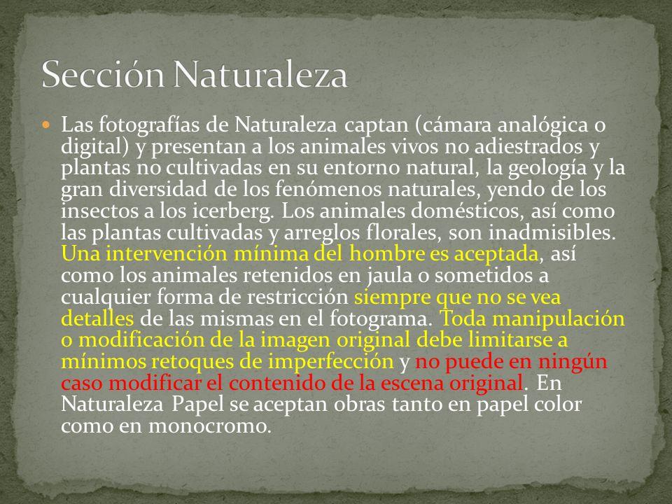 Las fotografías de Naturaleza captan (cámara analógica o digital) y presentan a los animales vivos no adiestrados y plantas no cultivadas en su entorno natural, la geología y la gran diversidad de los fenómenos naturales, yendo de los insectos a los icerberg.