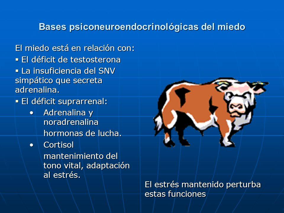 Bases psiconeuroendocrinológicas del miedo El miedo está en relación con: El déficit de testosterona El déficit de testosterona La insuficiencia del S