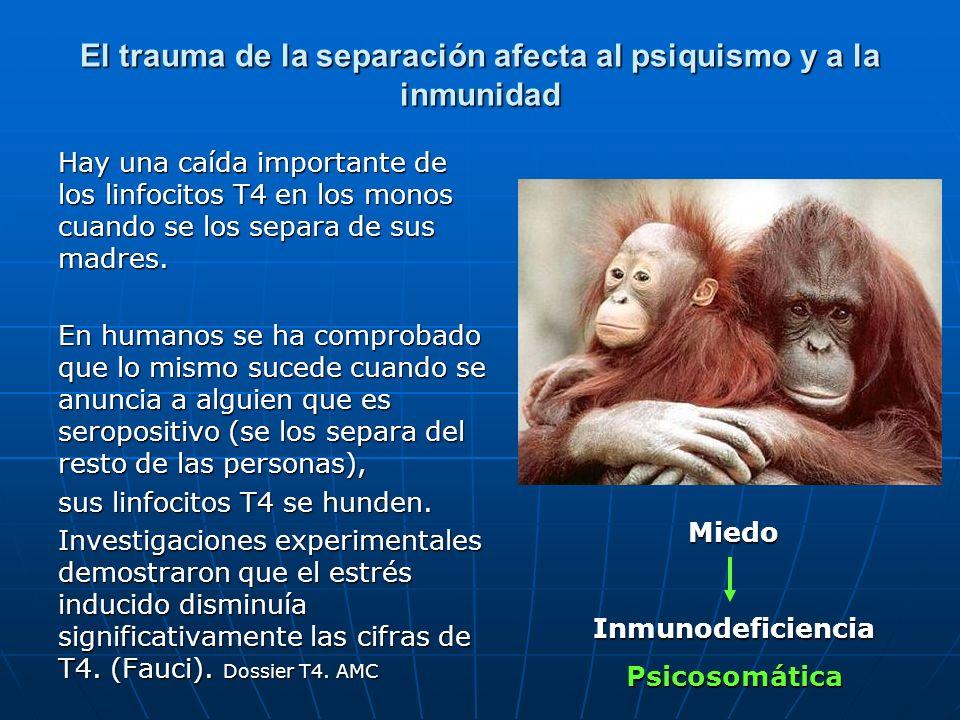 El trauma de la separación afecta al psiquismo y a la inmunidad Hay una caída importante de los linfocitos T4 en los monos cuando se los separa de sus