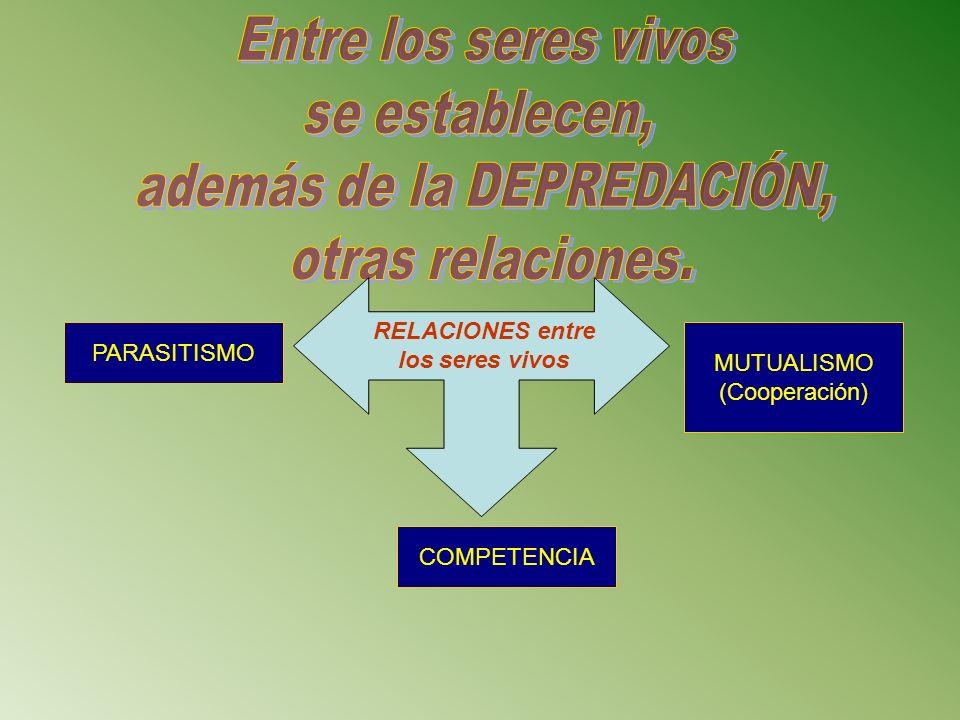 RELACIONES entre los seres vivos MUTUALISMO (Cooperación) PARASITISMO COMPETENCIA
