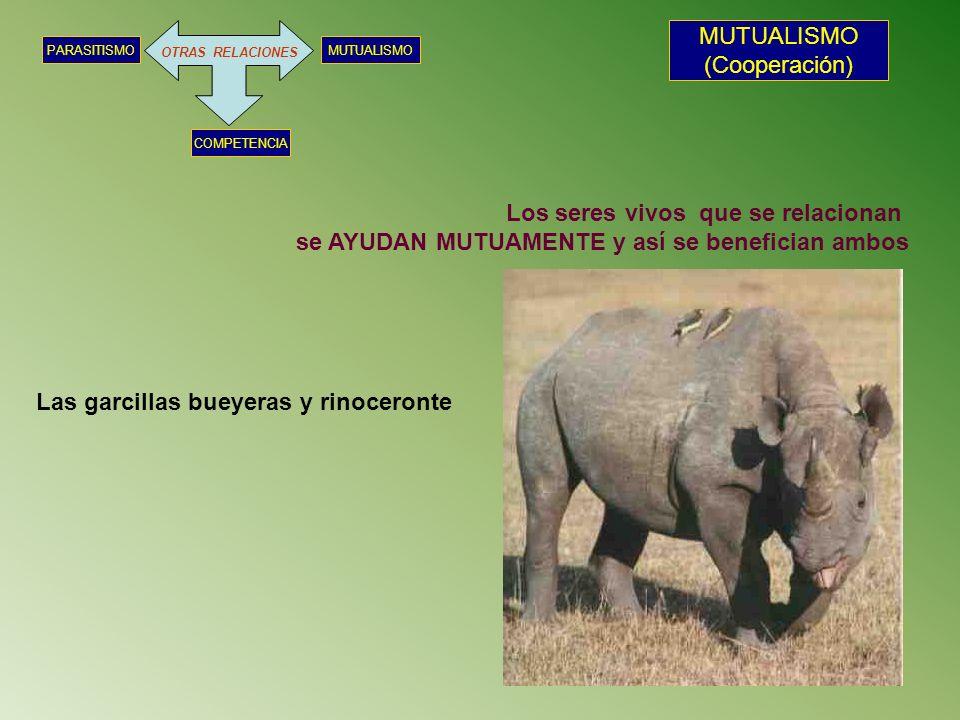 OTRAS RELACIONES MUTUALISMOPARASITISMO COMPETENCIA MUTUALISMO (Cooperación) Los seres vivos que se relacionan se AYUDAN MUTUAMENTE y así se benefician