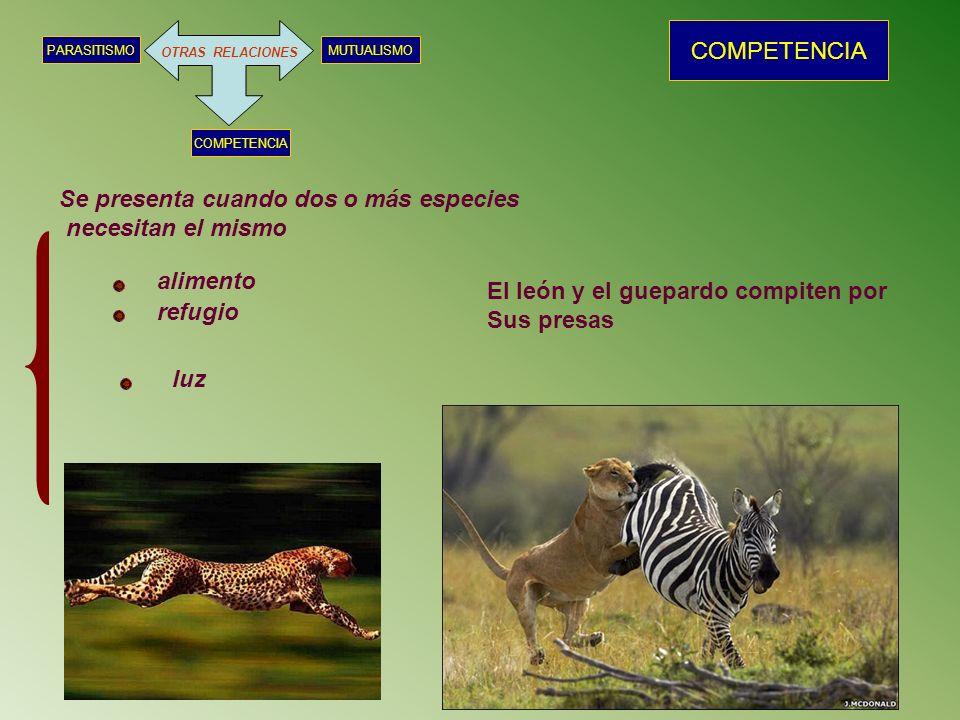 OTRAS RELACIONES MUTUALISMOPARASITISMO COMPETENCIA Se presenta cuando dos o más especies necesitan el mismo alimento refugio luz El león y el guepardo