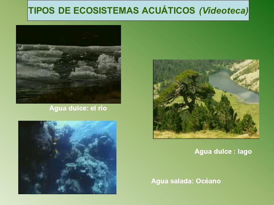 TIPOS DE ECOSISTEMAS ACUÁTICOS (Videoteca) Agua dulce: el río Agua dulce : lago Agua salada: Océano