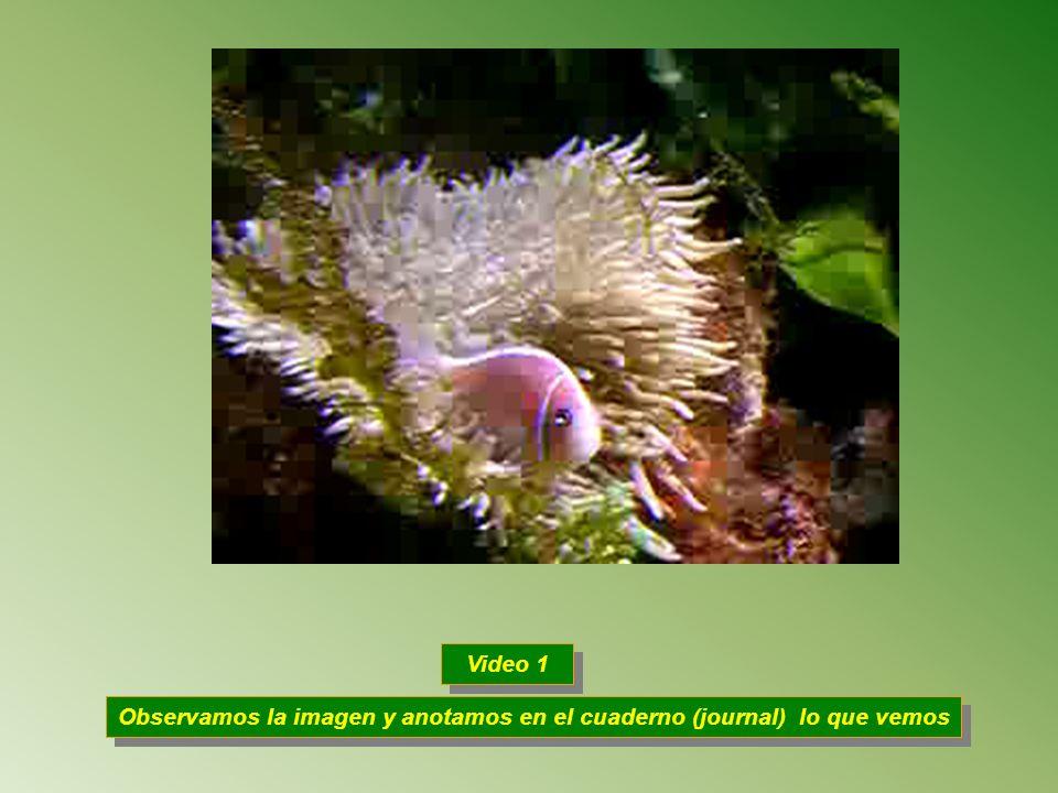 Observamos la imagen y anotamos en el cuaderno (journal) lo que vemos Video 1