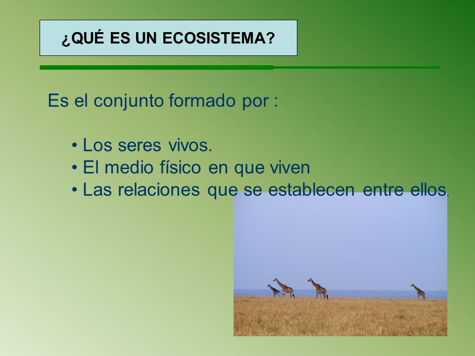 ¿Qué es un ecosistema? ¿QUÉ ES UN ECOSISTEMA? Es el conjunto formado por : Los seres vivos. El medio físico en que viven Las relaciones que se estable