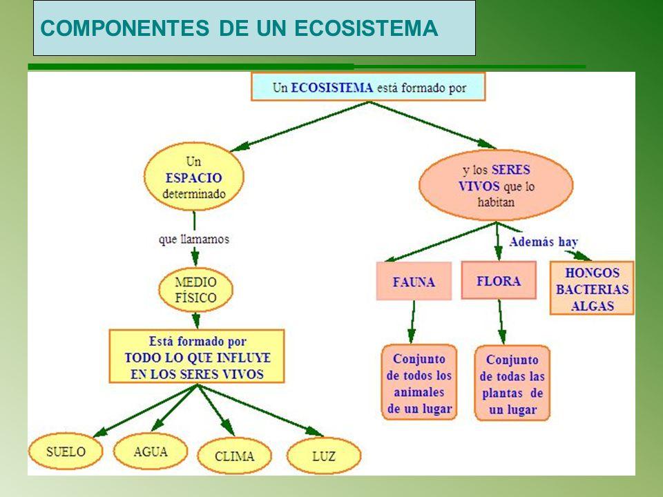 Relaciones entre seres vivos y medio físico ¿Qué es un ecosistema.
