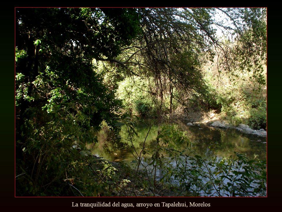 Campesinos al atardecer, Zacatecas
