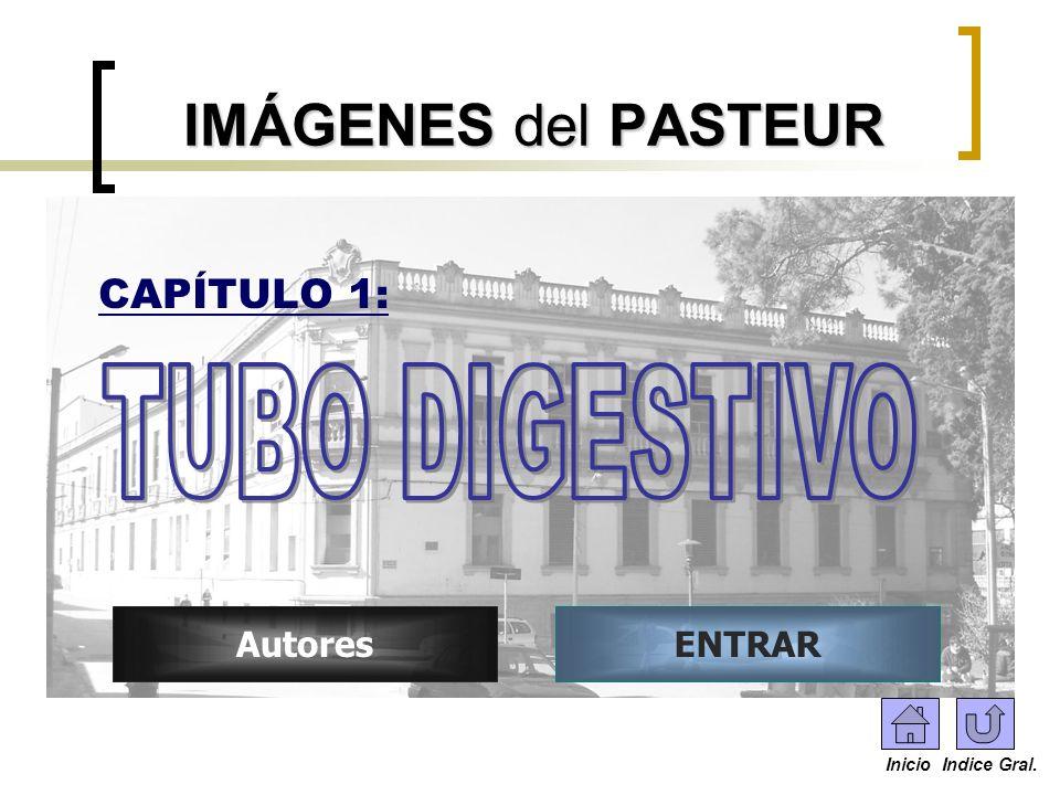 IMÁGENES del PASTEUR CAPÍTULO 1: AutoresENTRAR Inicio Indice Gral.