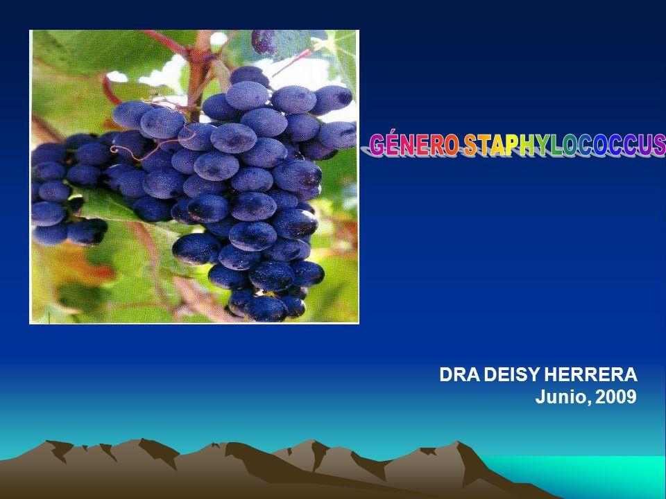 DRA DEISY HERRERA Junio, 2009