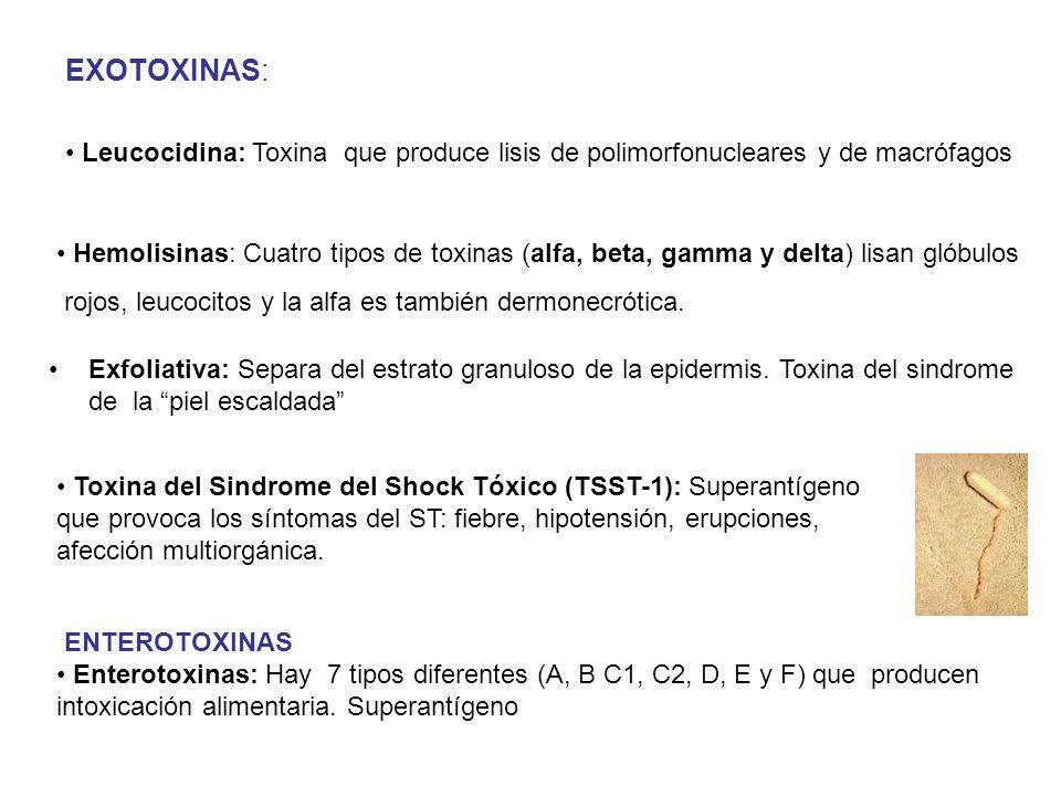 ENTEROTOXINAS Enterotoxinas: Hay 7 tipos diferentes (A, B C1, C2, D, E y F) que producen intoxicación alimentaria. Superantígeno Leucocidina: Toxina q