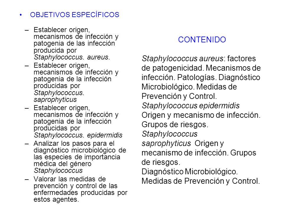 OBJETIVOS ESPECÍFICOS –Establecer origen, mecanismos de infección y patogenia de las infección producida por Staphylococcus. aureus. –Establecer orige