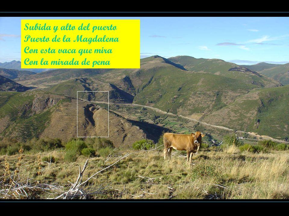 Subida y alto del puerto Puerto de la Magdalena Con esta vaca que mira Con la mirada de pena